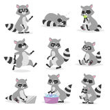 Cartoon raccoon vector illustration. Stock Image