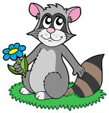 Cartoon racoon with flower Royalty Free Stock Images