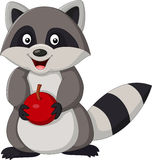 Cartoon racoon holding apple Stock Images