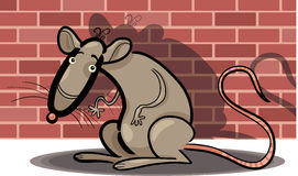 Cartoon rat against brick wall Stock Photography