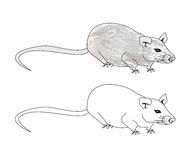 Cartoon rat doodle Royalty Free Stock Photography