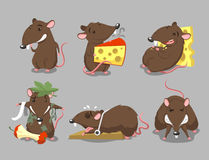 Cartoon rat illustrations Stock Image