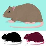 Cartoon Rat Rodent Stock Image