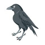 Cartoon Raven Royalty Free Stock Photo
