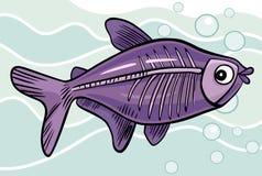 Cartoon x-ray fish. Cartoon illustration of x-ray fish Royalty Free Stock Image