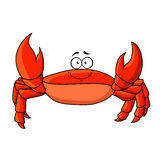 Cartoon red crab with upward claws. Cheerful smiling cartoon red crab with upward claws. Funny lightfoot red crab character, for underwater or wildlife, childish Royalty Free Stock Photos