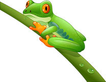 Cartoon Red-Eyed Amazon On Branch Stock Photography