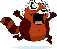 Cartoon Red Panda Panic Royalty Free Stock Image