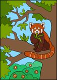 Cartoon wild animals. Little cute red panda eat leaves and sits on the tree branch. In the forest royalty free illustration
