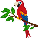 Cartoon red parrot on a branch Stock Photos