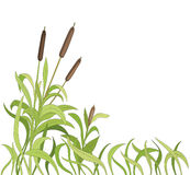 Cartoon reeds Royalty Free Stock Images