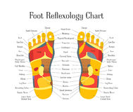 Cartoon Reflexology Feet Alternative Medicine. Vector. Cartoon Reflexology Therapy Feet Alternative Medicine Flat Style Design with Description Scheme. Vector Stock Photo
