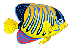 Cartoon regal angelfish Stock Image