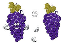 Cartoon ripe blue grape fruits on grapevine Royalty Free Stock Photography
