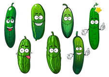 Cartoon ripe green organic cucumber vegetables Royalty Free Stock Images