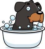 Cartoon Rottweiler Bath Royalty Free Stock Photography