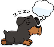 Cartoon Rottweiler Dreaming Stock Images