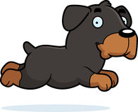 Cartoon Rottweiler Running Royalty Free Stock Photography