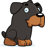 Cartoon Rottweiler Sitting Royalty Free Stock Image