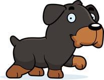 Cartoon Rottweiler Walking Stock Photos