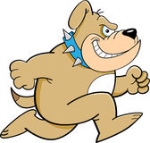 Cartoon Running Bulldog Stock Images