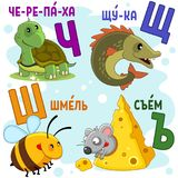 Russian alphabet part 7. Cartoon Russian alphabet for children with letters and pictures of a turtle, a pike, a bee, a bumblebee and a mouse Royalty Free Stock Image