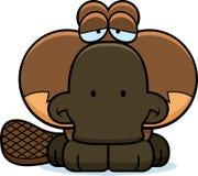 Cartoon Sad Platypus. A cartoon illustration of a little platypus with a sad expression Royalty Free Stock Photo