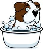 Cartoon Saint Bernard Bath Stock Image