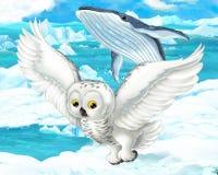 Cartoon scene - arctic animals - arctic owl and whale Stock Image