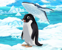 Cartoon scene - arctic animals - penguin and whale Royalty Free Stock Photo