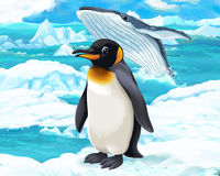 Cartoon scene - arctic animals - penguin and whale Royalty Free Stock Photography