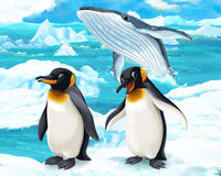 Cartoon scene - arctic animals - penguin and whale Royalty Free Stock Image