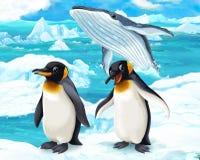 Cartoon scene - arctic animals - penguin and whale Royalty Free Stock Image