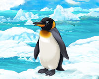 Cartoon scene - arctic animals - penguins Royalty Free Stock Images