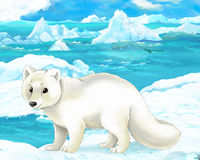 Cartoon scene - arctic animals - polar fox Royalty Free Stock Images