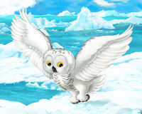 Cartoon scene - arctic animals - polar owl Royalty Free Stock Image