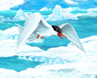 Cartoon scene - arctic animals - sea gull. Happy and colorful illustation for the children Stock Image