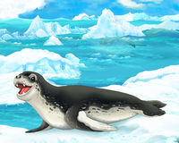 Cartoon scene - arctic animals - sea leopard Stock Images