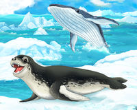 Cartoon scene - arctic animals - sea leopard and whale Royalty Free Stock Images