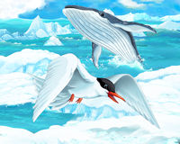 Cartoon scene - arctic animals - seagull and whale. Happy and colorful illustation for the children Stock Photography