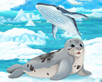 Cartoon scene - arctic animals - seal Royalty Free Stock Photo