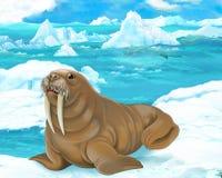 Cartoon scene - arctic animals - walrus Royalty Free Stock Photography