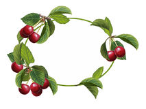 Cartoon scene with beautiful and colorful cherries frame on white background Royalty Free Stock Photos