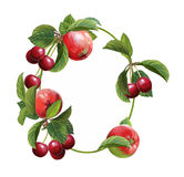 Cartoon scene with beautiful and colorful cherries frame on white background Stock Image