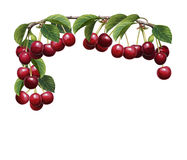 Cartoon scene with beautiful and colorful cherries frame on white background. Happy and funny traditional illustration for children - scene for different usage Stock Photo