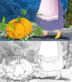 Cartoon scene for different fairy tales - woman's legs and pumpkin Royalty Free Stock Photos