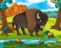 Cartoon scene - wild africa animals - buffalo Stock Photography