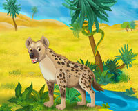 Cartoon scene - wild africa animals - hyena Royalty Free Stock Photos