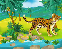 Cartoon scene - wild africa animals - leopard Royalty Free Stock Images