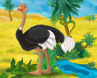 Cartoon scene - wild africa animals - ostrich Stock Image